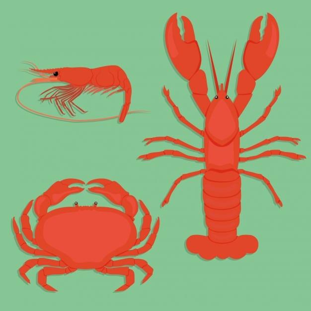 schelpdieren-ontwerpen-collectie_1212-544