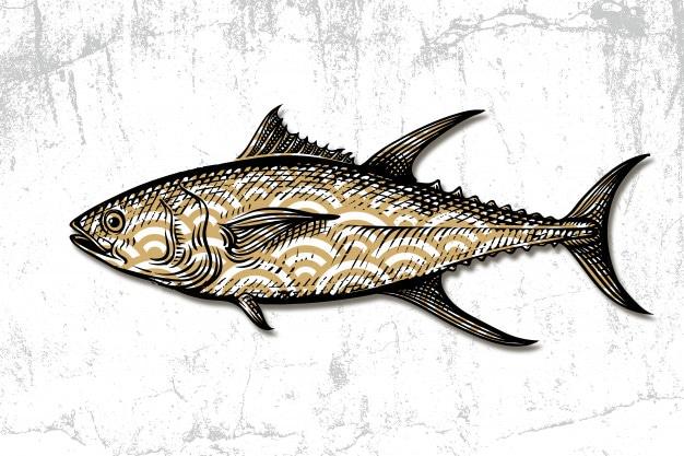 tonijn-zeevruchten-hand-getrokken-gravure_44649-94