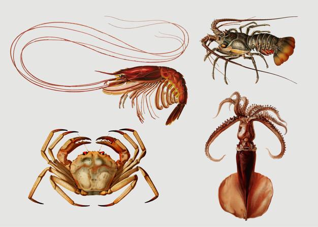 Marine life vintage illustration