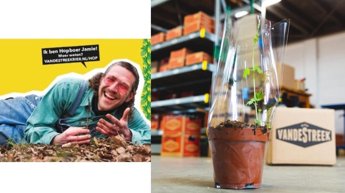 vdStreek-Hopplant